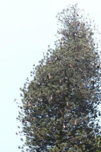 sri-lanka-35-of-44 kandy botanical gardens
