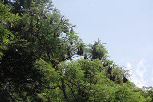 sri-lanka-36-of-44 kandy botanical gardens